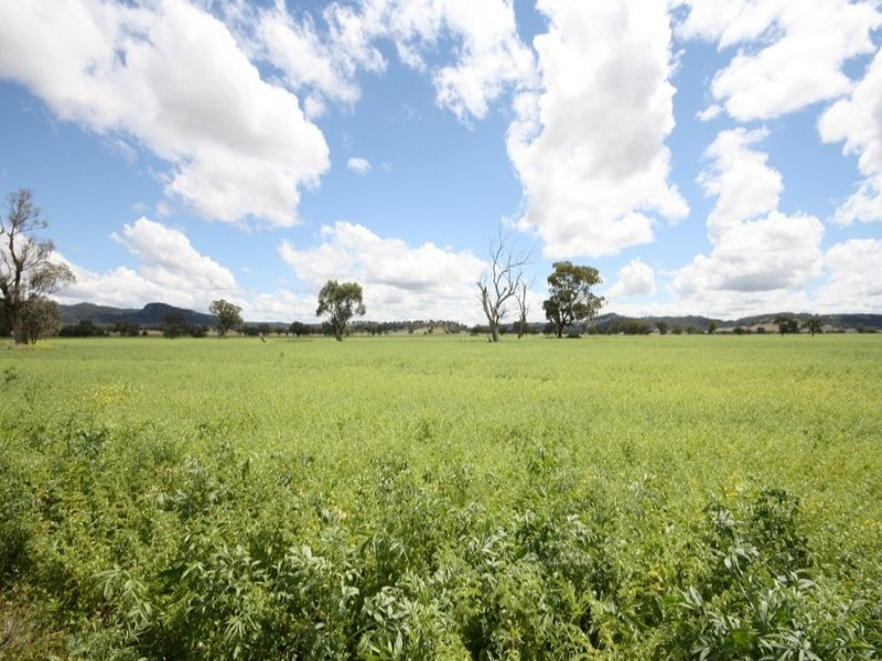 Larola, Black Stump Way, Mullaley, NSW 2379